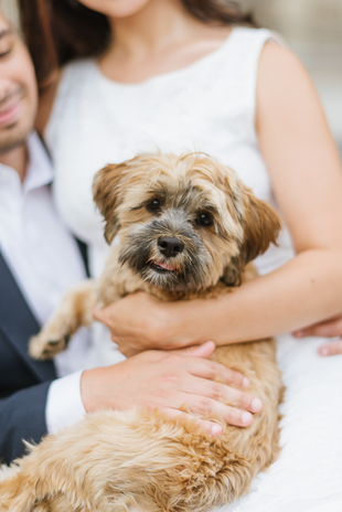 adorable pup at the engagement photo shoot